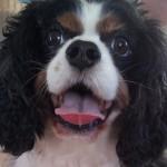 Jeg er jordens heldigste hund - Er der nogen der vil lege?