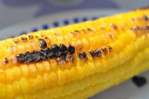 Marineret kyllingefilet og søde majs på grillen