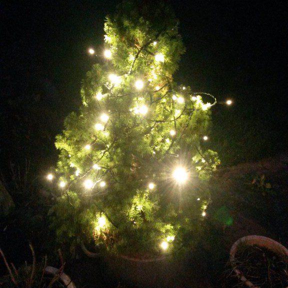 Jule-laissez-faire eller julehystade? Lidt om julens hamster(h)jul