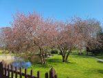 Glade forårsbobler i kroppen – lykke og sommereufori
