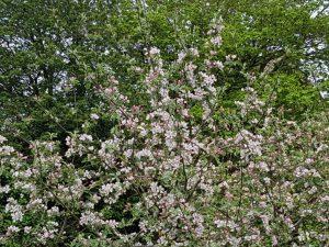 Forårsfarver - forårsforelskelse -forårsfryd