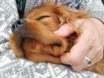 Et hundelivs lyksaligheder – om kærlighed til firbenede venner