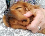 Et hundelivs lyksaligheder - om kærlighed til firbenede venner