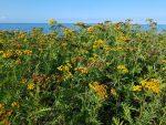 Fortryllende sensommersol, sommerhuslykke og brombærjubel
