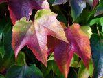 10 lækre opskrifter - du kan lune dig på i efterårsferien