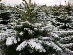 Vinterferie – storm og influenza – det bli'r en oplevelse!