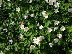 Forårsbobler, midtvejsstemning og stærke MOR-følelser