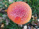 Efterårsferie i sommerhuset – sol, ro, glæde og smukke farver