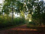 Skønne efterårsferieglimt - tak du milde skaber - og gavmilde vejrgud