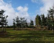 Spirende forårsfornemmelser - som en forårsglad ko på græs