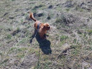 Kallehunden - om søde små firbenede venner