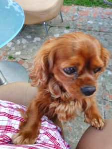 Kalle i Toscana - hunden med familien sydpå