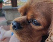 Kalle i Toscana - tips når hunden skal med sydpå