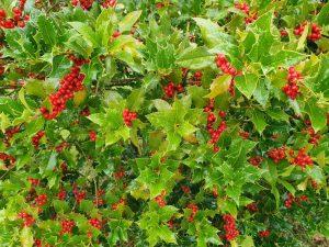 Skønne efterårsglimt