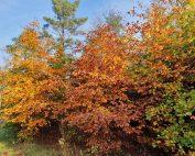 Skønne efterårsglimt - en fortryllende solskinsmandag