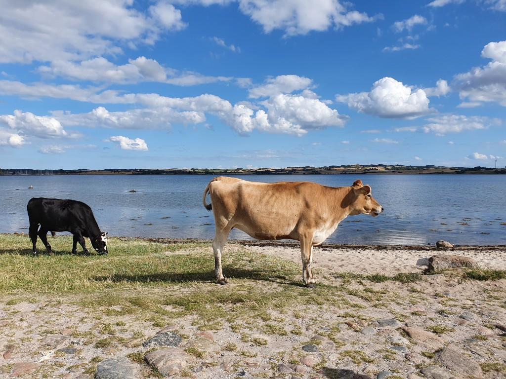 Mols og Kalø Slotsruin - vil du med på tur?